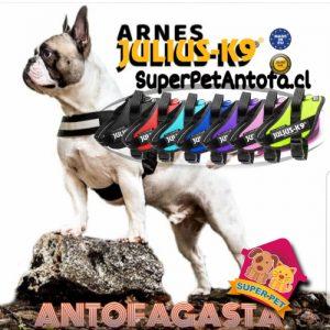 Arnés para perros Julius-K9