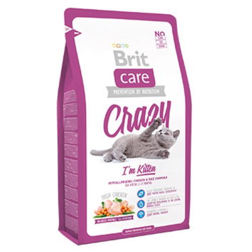 Brit Crazy Kitten